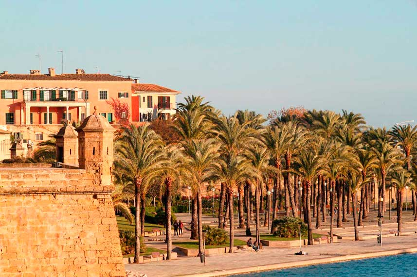 Mandelblüte Mallorca: Die Kathedrale