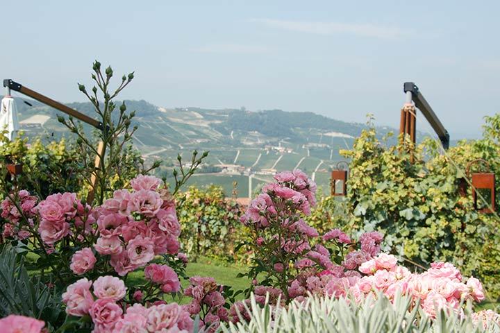 Piemont Weinberge