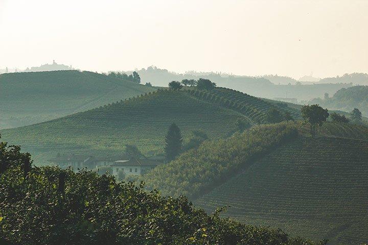 Piemont Wein Barolo