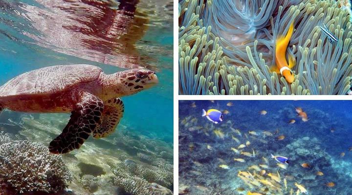 Schnorcheln auf den Malediven im Kandima Maldives